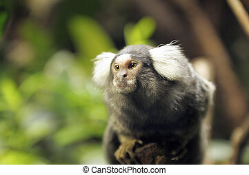 A portrait of a small monkey