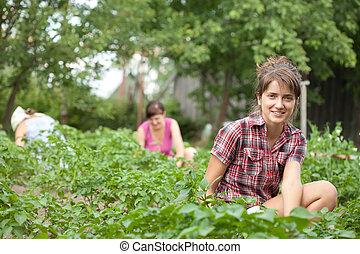 trabajando, jardín, ella, mujeres