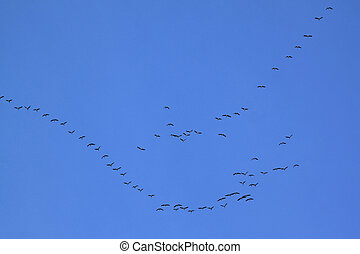 Birds migration - Migrating birds forming a V formation....