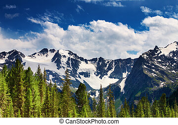 Mountain landscape - Landscape with green pines and snowy...