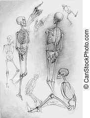 Sketch of skeletons - Set of human skeletons in different...