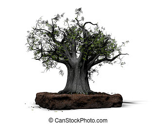 bonsai isolated on white background