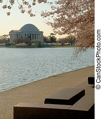 Cherry Blossoms - Cherry blossoms along the tidal basin with...