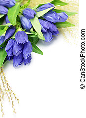 gentian and Japanese pampas grass - I took a gentian and a...