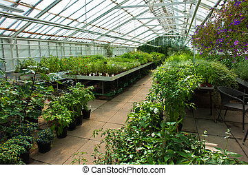 Inside a greenhouse full of plants and flowers