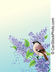 Spring background with sparrow at lilac branch