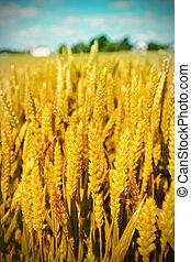 agriculture landscape - summer agriculture landscape in...