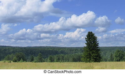 timelapse landscape alone pine tree in field against forest...