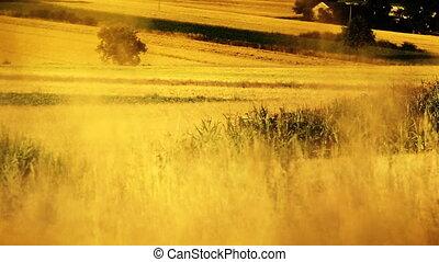 Village scenery. Harvest time.