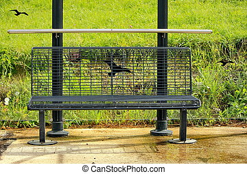 bench and grass green and bird
