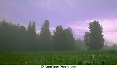 morning in foggy forest timelapse - summer morning in foggy...