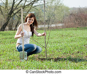 middle age woman planting tree outdoor