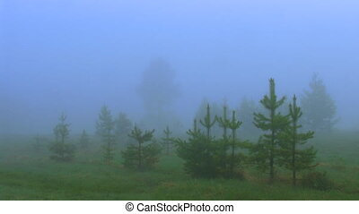 timelapse dispersing fog in forest - timelapse dispersing...