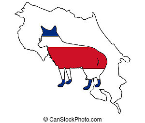 Coyote Costa Rica