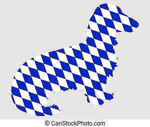 Bavarian longhaired badger