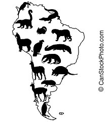 Animals South America