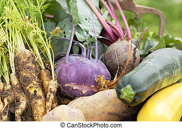 Collection of harvested vegetables. - Collection of freshly...