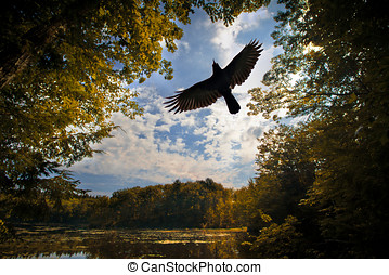 Raven Flying through Forest