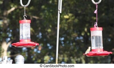 Hungry Hummingbirds - It is amusing to watch these birds...