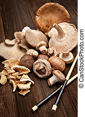 Mushrooms - Variety of various mushrooms shot on a natural...