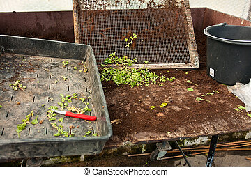 Bedding nursery table in a greenhouse