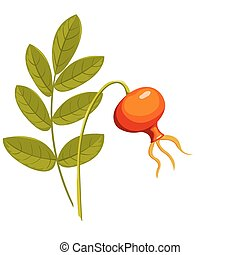 Rose hip1. - Rose hip. Isolated on the white. Vector...
