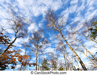 Forest on blue sky