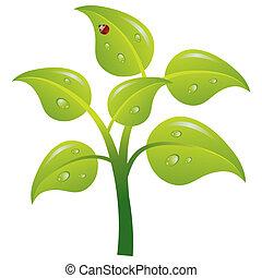 Green tree, vector illustration