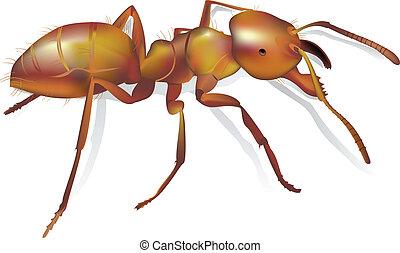 蟻, 現実的, 偉人, 詳細, 噛み合いなさい