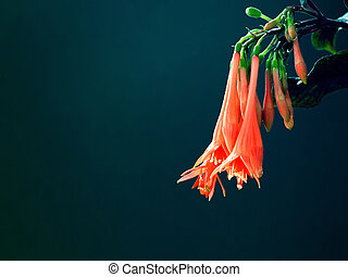 Fuchsia flowers on blue-green background.
