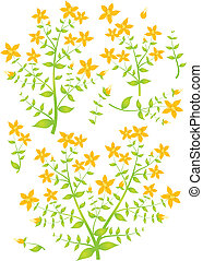 Floral elements for design, St.John?s Wort, vector - Floral...