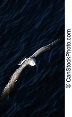 Flying seagull over the sea
