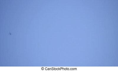 Libélulas, ms, azul