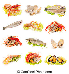shellfish and fish - collection of shellfish and fish on...