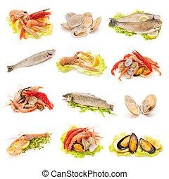 shellfish and fish - collection of shellfish and fish on...