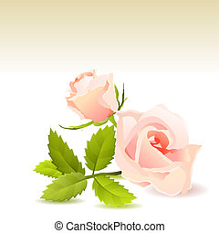 Beautiful pink rose and bud with green leaves