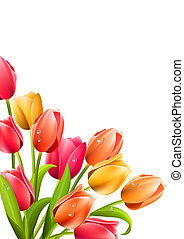 Big bunch of tulips on white background