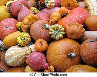 Harvested pumpkins and gourds