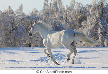 white horse in snow