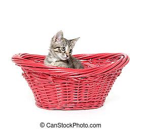 Cute tabby cat in red basket - Cute tabby kitten sitting...