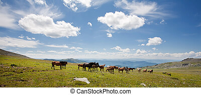 Mountain Altai. A beautiful landscape with ???????? and the blue sky.