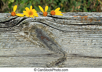 Sunflowers that spell love on top of wood - sunflowers...