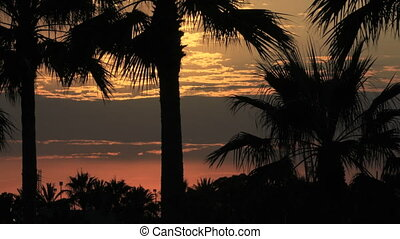 TLP-0006 LB Palm Sunset - A beautiful tropical sun setting...