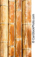 Bamboo cane pattern texture background