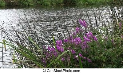 Reeds and flowers by a river