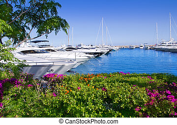 Calvia Puerto Portals Nous bougainvilleas garden in Mallorca...