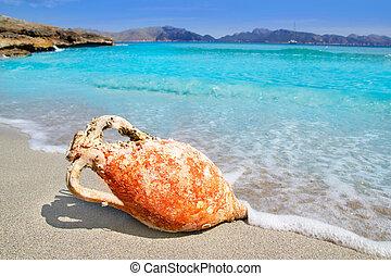 Alcudia Beach Mallorca with roman amphora