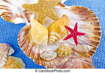shell - different mussel collection on blue background