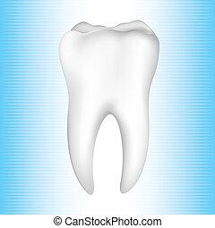 saudável, dentes