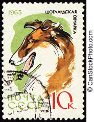 Colly on post stamp